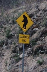 Sasquatch crossing